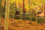 竹林と紅葉2