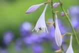 桔梗の里の花3