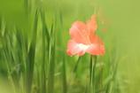 桔梗の里の花2