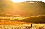 ゴールドハンター_金色の狩人