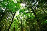 南アルプス水の森_木立