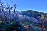 八経ヶ岳_満開の樹氷