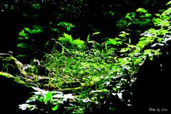 輝く朝 霊峰の森に