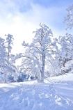 White Blue Tree