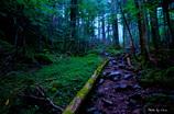 八ヶ岳 精霊の森を行く