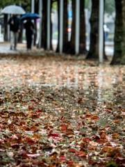 楠木の落ち葉と春の雨