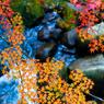 秋の色めき
