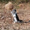 ネコに風船