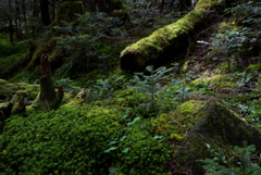 神秘の森・・・