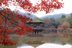 鷺池の秋…