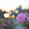 街に 咲く花