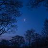 月あかりと夜明けの桜