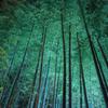 青蓮院門跡 ー竹林の幻想ー