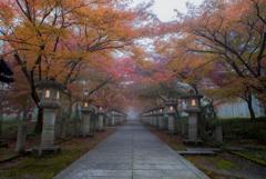 朝たちこめる霧の高山寺