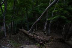 森で感じること…