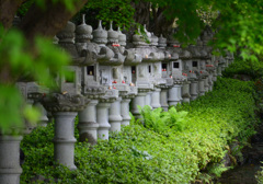 新緑の勝尾寺