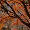 奈良県吉野山 上千本