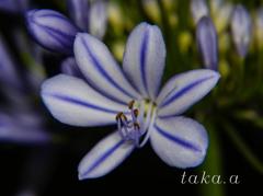愛の花09