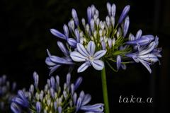 愛の花10