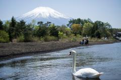 白鳥の湖ー山中湖