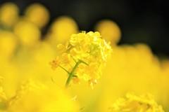 春を感じる時