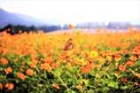 蝶も秋を満喫