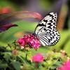 冬の蝶に魅了されて
