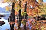 藺牟田池の紅葉