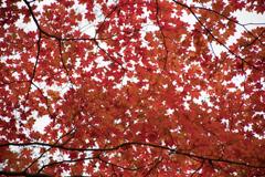 空を見上げたら〜紅葉(*゚∀゚*)
