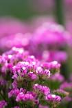 〜お花畑〜