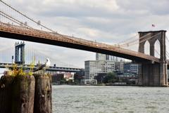 Seagull & Brooklyn Bridge