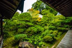 Garden of Eikando Zenrin-ji