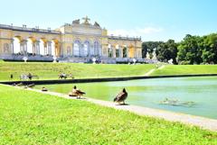 Duck & Schönbrunn Gloriette