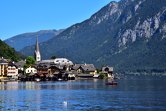 Swan in Hallstatt