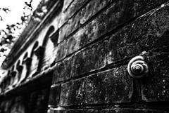 Twilight Snail