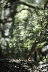 a deep forest