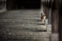 登廊を見上げると・・・