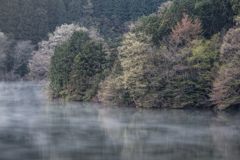 室生湖、春の彩り