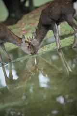 Reflection Ⅹ