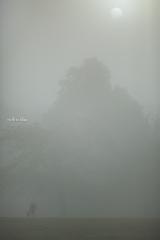 飛火野 濃霧の夜明け