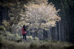 葉桜になる前に