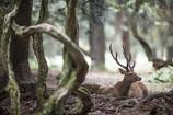 奈良の鹿、楽園から出ないで