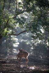 今朝の奈良公園