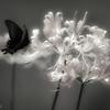 白と黒の妖精
