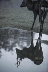 ReflectionⅠ