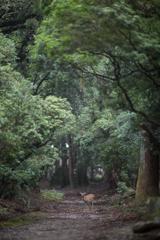 懐の大きい奈良公園