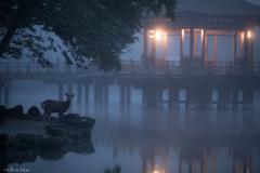 今朝の鷺池、浮見堂