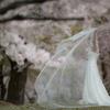 奈良公園 海外 wedding