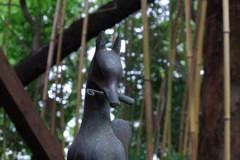 稲荷様の狐_渋谷氷川神社