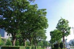 並木_和田倉噴水公園